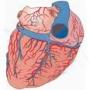 Palpitazioni (Tachicardia)